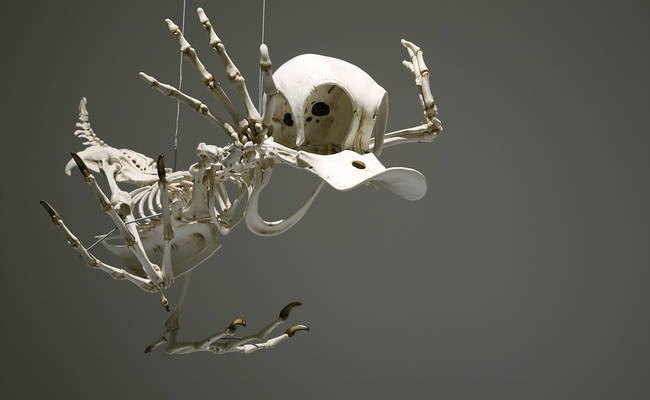 Can You Recognize These Famous Cartoons By Looking At Their Skeletons?